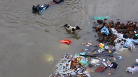 Kahraman köpek, yavrularını böyle kurtardı