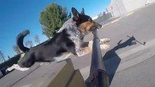 Köpek ve Selfie çubuğu