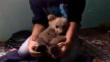 Yavru ayıyı evine getirdi