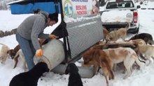 Yemekler çöpe değil sokak hayvanlarına