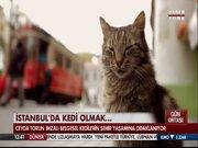 İstanbul'da kedi olmak