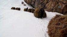 Hayvanlar için dağdan kızaklarla ot taşıyorlar