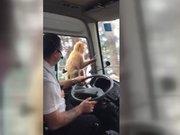 Şoförün öğle yemeğini çaldı