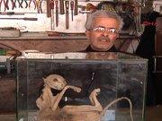 Türü bilinmeyen hayvan iskeletini camekanda sergiliyor