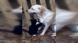 Kedi ve köpeğin şaşırtan dostluğu