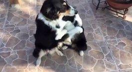 Onlar iki dost
