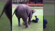 Sahibi için endişelenen fil