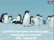 İstanbul büyüklüğünde buzdağı 15 bin penguen öldürdü