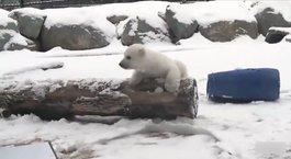 İlk defa karla tanıştı