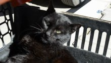 Yavru kedi tüfekle vurulmuş halde bulundu