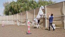 Atı dize getirdi