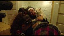 Iraklı sığınmacı kedinin Norveç'e inanılmaz kaçışı