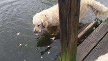 Ağzıyla balık yakaladı
