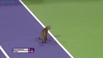 Tenis kortuna kedi girerse