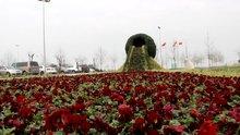 Dünya'nın en büyük çiçek şelalesi