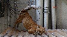 Mersin Jilet tele takılan kediyi itfaiye ekipleri kurtardı