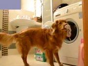 Çamaşır onun işi