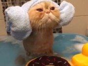 Banyo keyfi yapan sevimli kedicik