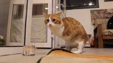 Umut Kedi ayaklandı