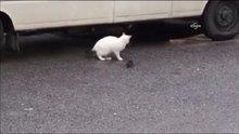 Fare, kedinin elinden ölü taklidi yaparak kurtuldu