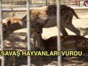 Gazze'deki savaş hayvanları vurdu