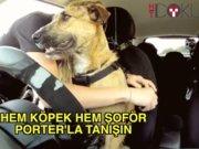 Şoförlük yapan köpek Porter'la tanışın
