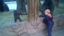 Gorille saklambaç oynayan ufaklık