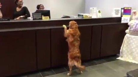 Köpek bankaya gelirse