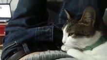 """Hapşırdığınızda """"çok yaşa"""" diyen kedi"""