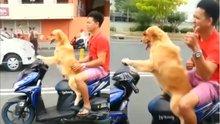 Yolların ustası olan köpek