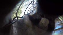 Çaldığı kamera ile selfie çeken maymun