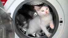 Çamaşır makinesinde spor yapan kedi