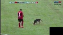 Maç esnasında sahaya atlayan köpek