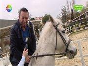 Mustafa Topaloğlu at çiftliğine giderse