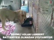 aslan Lambert