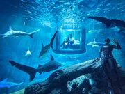 Köpekbalığı ile birlikte uyumak
