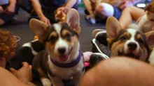 Köpeklerin hayatlarımıza kattığı mutlukluk