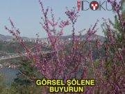 İstanbul erguvanlanla süslendi