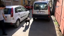 Üsküdar'da pitbull dehşeti: 3 yaralı