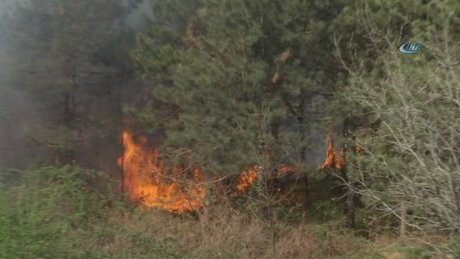 Kemerburaz'da ormanlık alan alev alev yandı
