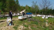 Toplu arı ölümleri