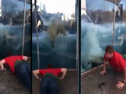 Taklit meraklısı kutup ayısı