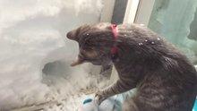 Tünel açan kedi