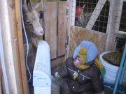Kar Tulumu İçinde Dostlarını Ziyaret Eden Maymun
