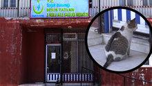 Doğumu yaklaşınca aile hekimine giden kedi