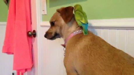 Papağan köpeğe böyle kafa tuttu