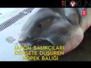 1 tonluk köpekbalığı yakalandı
