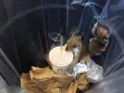 Milkshake içen sevimli sincap