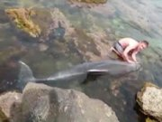 Kayalıklara sıkışan yunusa kurtarma operasyonu