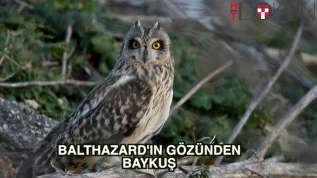 Balthazar'ın gözüyle 180 derecelik baykuşlar